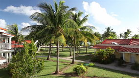 Leaves of the coconut trees waving in the wind. On the territory of the hotel stock video