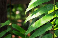 Leaves in a coffee shop in Thailand. Close up royalty free stock photos