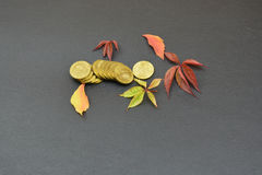 Leaves and coins on black background Royalty Free Stock Images