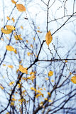 Leaves in a cold autumn Stock Image
