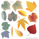 Leaves collect-01. Leaves collection template. Vector illustration with colorful  leaves Royalty Free Stock Photography