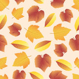 Leaves collect-04. Vector hand drawn seamless pattern with colorful autumn leaves Royalty Free Stock Photos