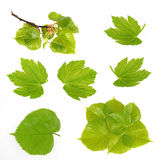 Leaves collection Stock Image