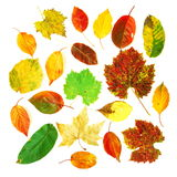 Leaves collection stock photo