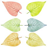 Leaves collection royalty free stock image