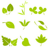 Leaves collection Royalty Free Stock Photo