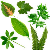 Leaves Collection Royalty Free Stock Photography