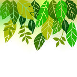 Leaves, Collection For Designers Stock Photography