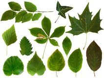 Leaves collection 2
