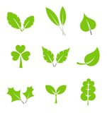 Leaves collection Stock Photography
