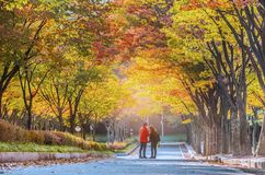 Tae Kwon continues In the fall, Incheon, South Korea Royalty Free Stock Image