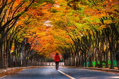 Tae Kwon continues In the fall, Incheon, South Korea Royalty Free Stock Photography