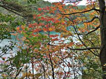 Leaves color change in autumn of Japan. stock photography