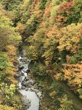 Leaves color change in autumn of Japan. royalty free stock image