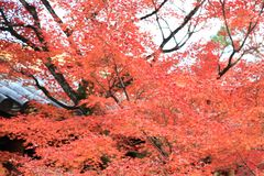 The Leaves color change in tofukuji temple at kyoto in Japan stock photos