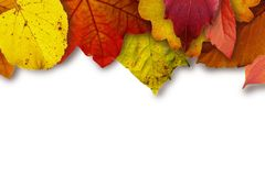Leaves, Colorful, Color, Yellow Stock Photo