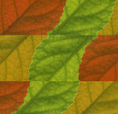 Leaves Colour background Royalty Free Stock Photos