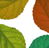 Leaves Colour background Stock Images