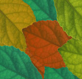 Leaves Colour background Stock Photos
