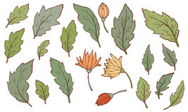 Leaves. For composition, frame and other vector illustration