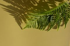 Leaves composition. Pattern made of wild fern leaves and shadow on yellow background. royalty free stock photography