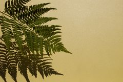 Leaves composition. Pattern made of wild fern leaves and shadow on yellow background. royalty free stock photo