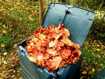 Leaves in compost bin. Compost bin full of autumn leaves to provide leaf mulch Royalty Free Stock Image
