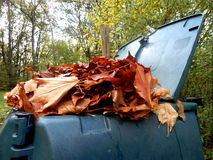 Leaves in compost bin Royalty Free Stock Photos