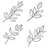 Leaves contours Royalty Free Stock Photo