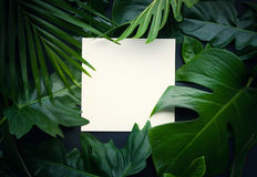 Leaves with copy space background.Tropical Botanical Royalty Free Stock Image