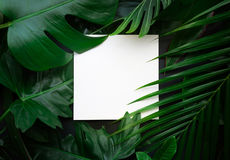 Leaves with copy space background.Tropical Botanical. Real leaves with white copy space background.Tropical Botanical nature concepts design Royalty Free Stock Image
