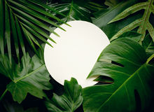 Leaves with copy space background.Tropical Botanical Royalty Free Stock Photo