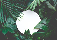 Leaves with copy space background.Tropical Botanical Stock Images