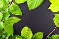 Leaves and copyspace Royalty Free Stock Photo