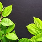 Leaves and copyspace Stock Photos