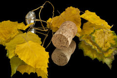 Leaves and cork Stock Images