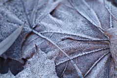 Leaves covered with frost royalty free stock photos