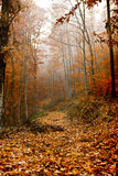 Leaves covered path in the forest Stock Photos