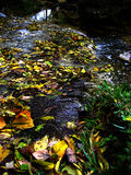 Leaves in a Creek Stock Photo