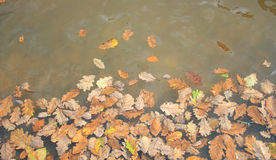 Leaves in Creek Stock Photo