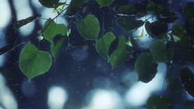 Leaves crock in the wind. The winter and snow stock footage