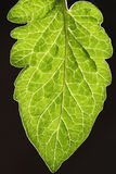 Leaves with dark background. Spring Stock Photo