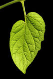 Leaves with dark background. Spring Stock Photos