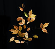 Leaves In The Dark. Leaves on a branch in the dark Royalty Free Stock Image