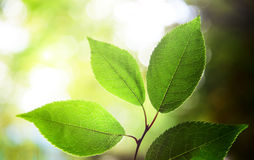 Leaves in deep forest Stock Photos