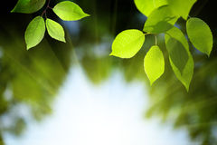 Leaves in deep forest Stock Images