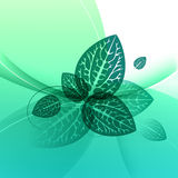 Leaves design, abstract green background, eco composition Stock Photography