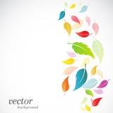 Leaves design on white background. Vector Illustration Stock Images