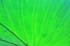 Leaves detail background Royalty Free Stock Photos