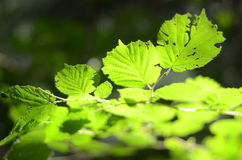 Leaves, Stock Photography